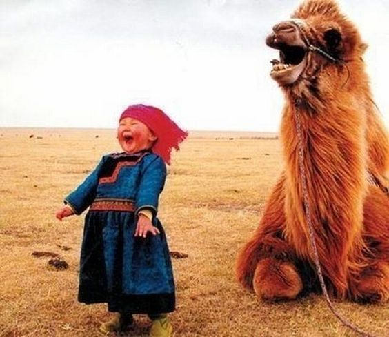 Girl and Llama Share a Laugh